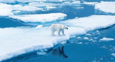 Arktis – Antarktis: die Unterschiede 10
