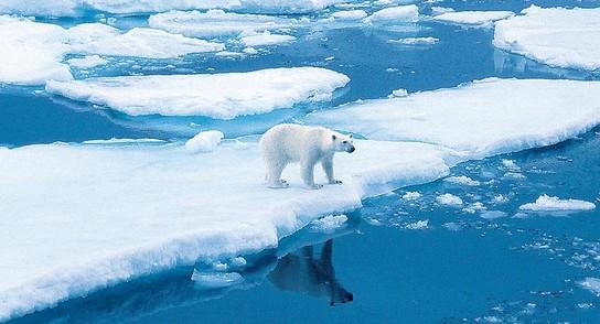 Arktis – Antarktis: die Unterschiede 6