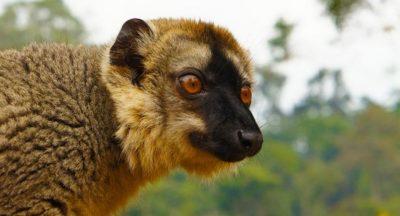 Andasibe – zu Besuch auf der Lemuren-Insel 29
