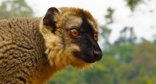 Andasibe – zu Besuch auf der Lemuren-Insel 15