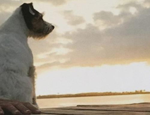 Gespräche mit meinem Hund | Stephan Boden