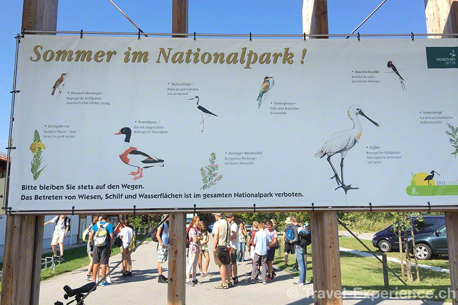 oesterreich, burgenland, neusiedler see, Nationalpark, Seewinkel, Voegel im sommer