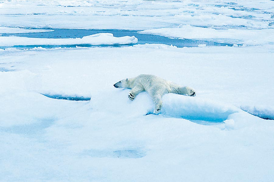 Arktis – einfach bärenstark! 8