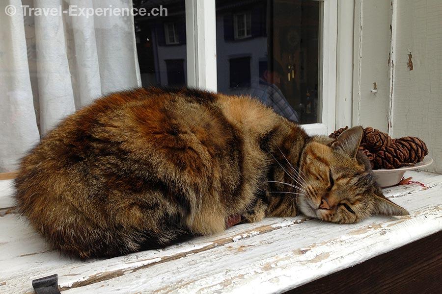Apenzell, schlafende Katze