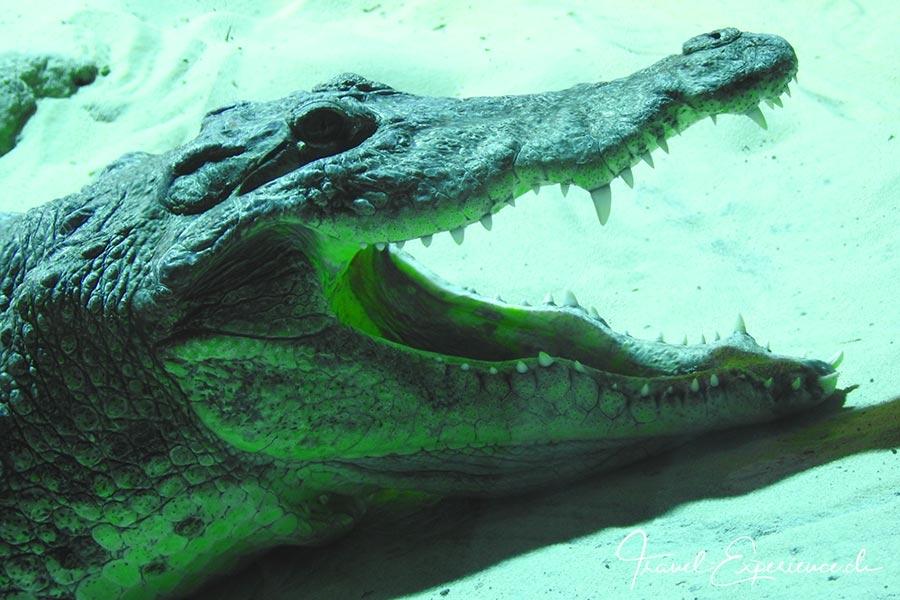 Schweiz, Lausanne, Aquatis, Aquarium, Vivarium, Afrika, Krokodil