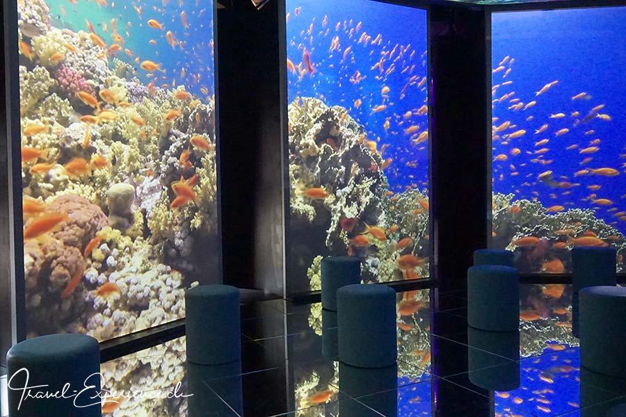 Schweiz, Lausanne, Aquatis, Aquarium, Vivarium, Ruheraum, Projektion, Barrier Reef,