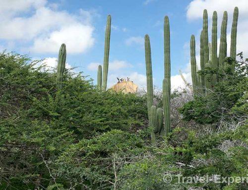 Aruba – die fröhliche Insel wird grün