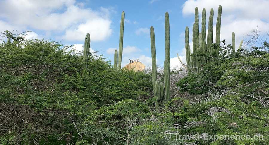 Karibik, Aruba, Arikok Nationalpark Karibik, Aruba, oelraffinerie Karibik, Aruba, Juliette Carvalhal