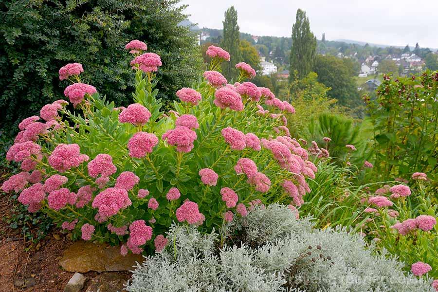Badenweiler, Schlosspark, Blumen, Kräuter, Hildegard von Bingen