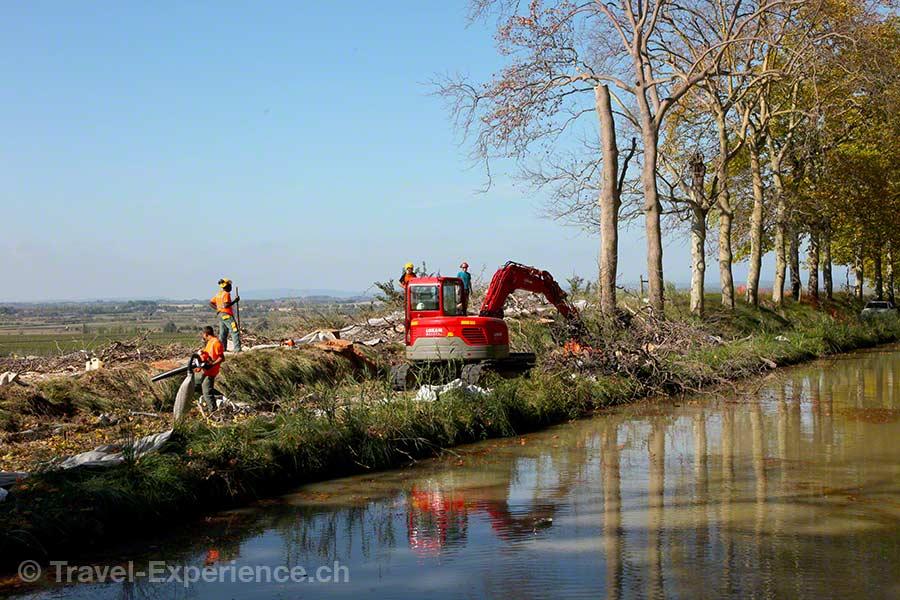 Frankreich, Canal du Midi, Poilhes, Holzfaeller, Chancre Colore, Pilzkrankheit, Platanen