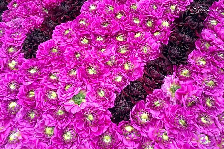 Blumenkorso Ebbs, Kufstein, Dahlien