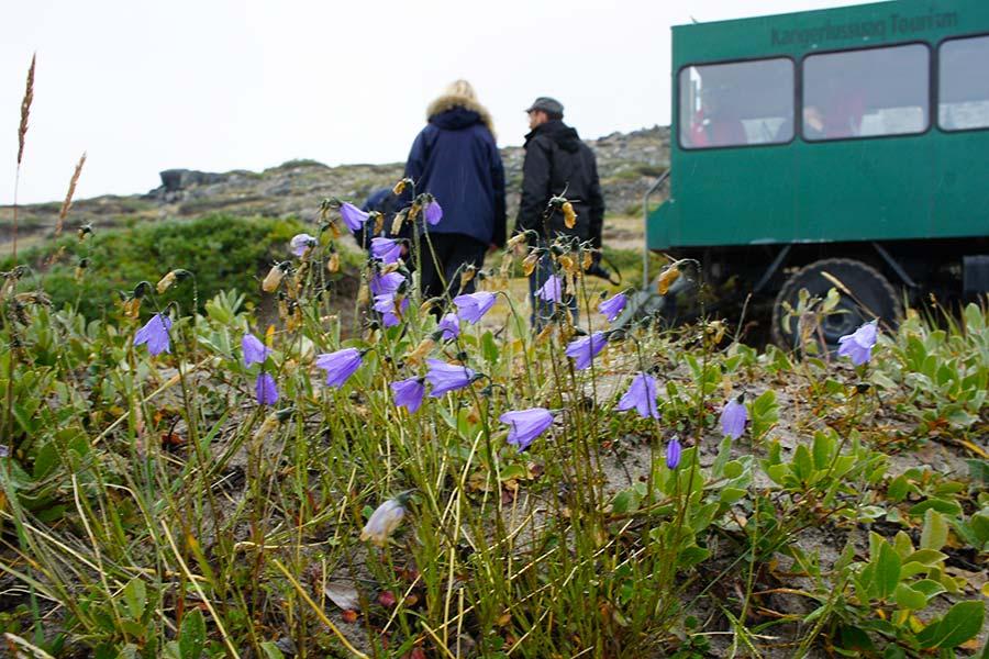 Groenland, Blumen