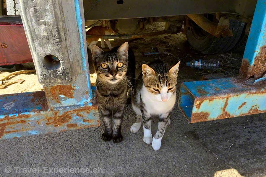 Griechenland, Korfu, Petriti, Katze, Cat
