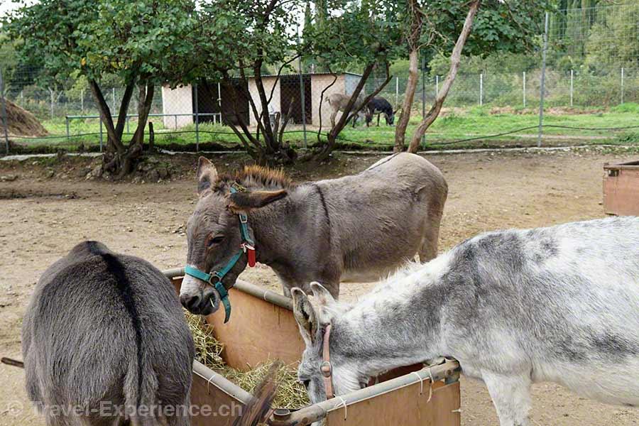 Griechenland, Korfu, Esel, Donkey Rescue