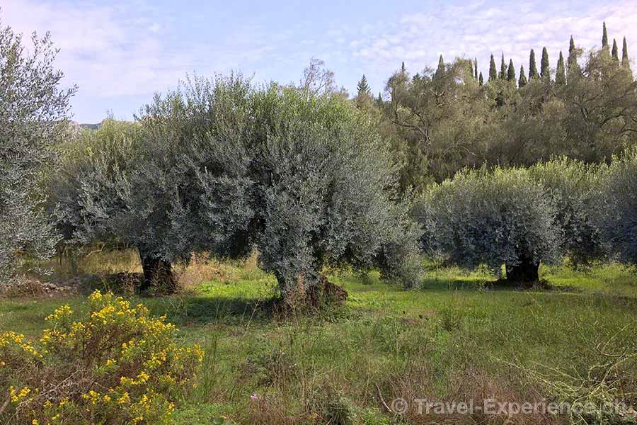 Griechenland, Korfu, Wanderung, Oliven