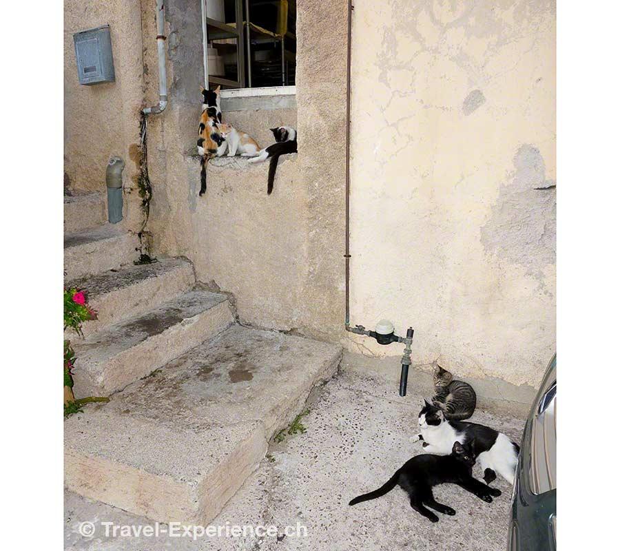 Korsika, Algajola, Restaurant, Katzen