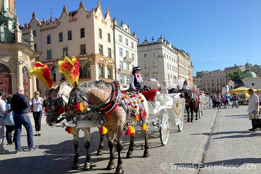 Polen, Krakau, Hauptmarkt, Rynek Glowny, Pferde, kutsche