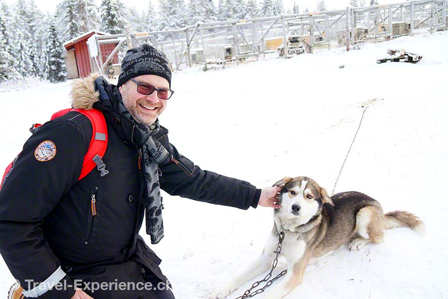 Lappland, Finland Huskys, Erae Susi