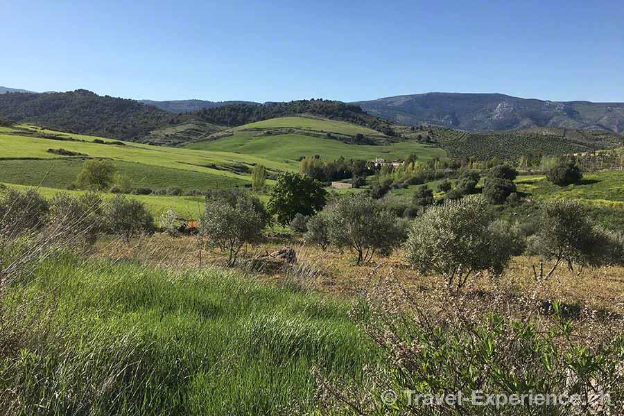 Spanien, Andalusien, gruene Landschaft zwischen Ronda und Malaga