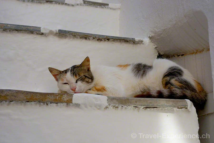Mykonos, Katze