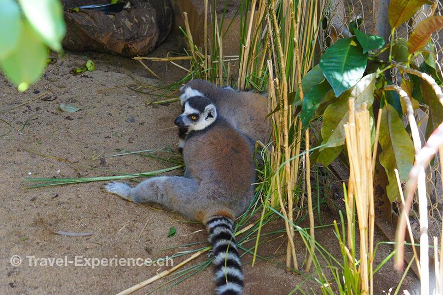 Madagaskar, Nosy Be