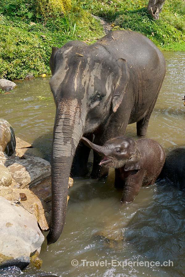 Patara Elephant Farm, Chiang Mai, Thailand, Elefant