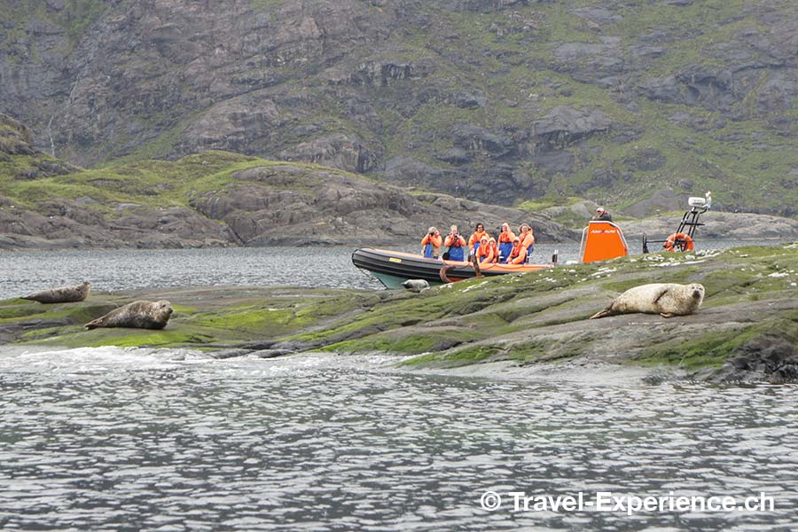 Schottland, Skye, Seehunde
