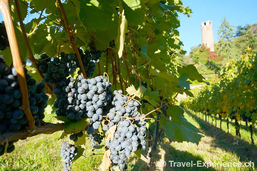 Südtirol, Rottensteiner, Wein, Trauben