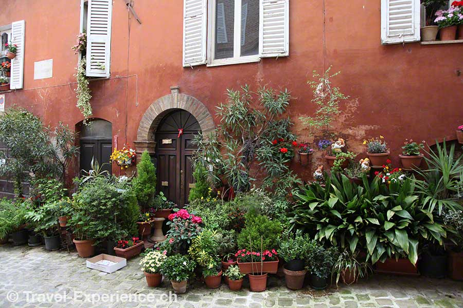 Italien, Marken, Amandola, Blumen