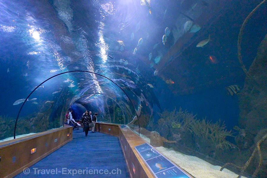 Valencia, Oceanografic, Unterwasser, Tunnel