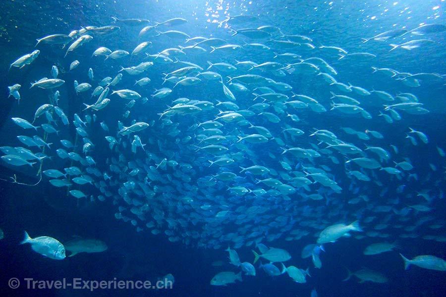 Valencia, Oceanografic, Aquarium