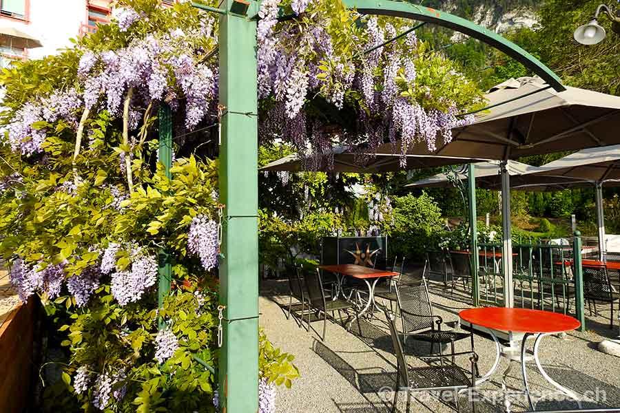 Hotel Vitznauerhof, Vitznau, Vierwaldstaettersee, Garten
