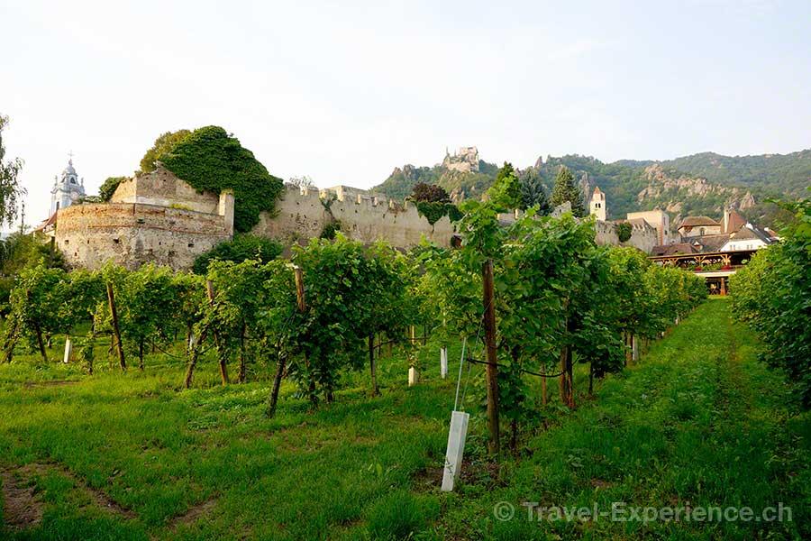 Wachau, Dürnstein, Stadtmauer, Reben, Wein