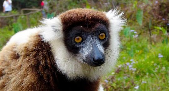 Madagaskar: Hier ist Fliegen Glückssache 2