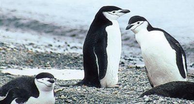 Antarktis: Der Kontinent der Pinguine 12