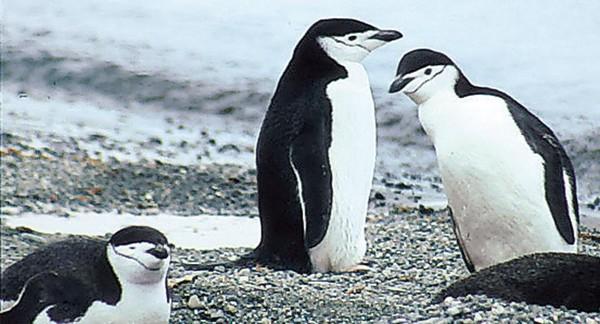 Antarktis: Der Kontinent der Pinguine 8