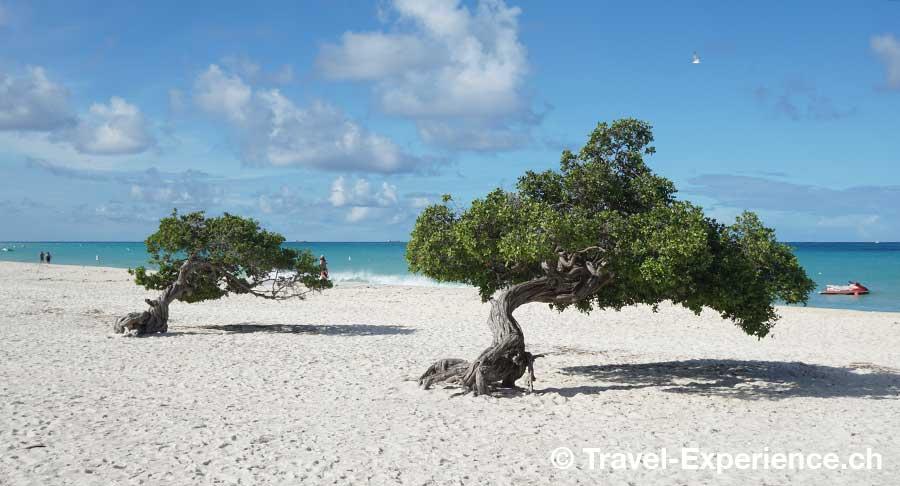 Aruba Divibaum