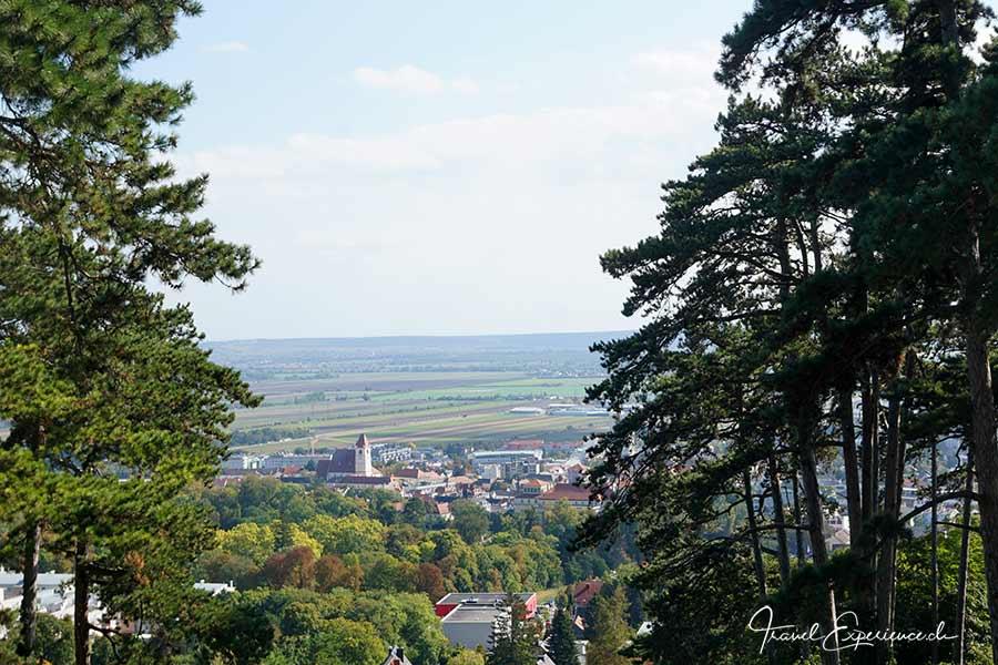 Burgenland: Gans glücklich 5