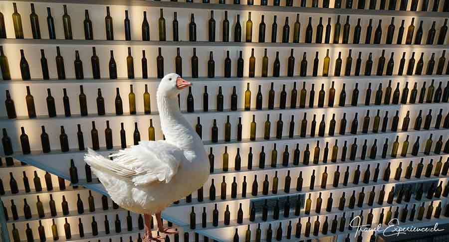 Burgenland – Gansl & Wein – alle Infos 1