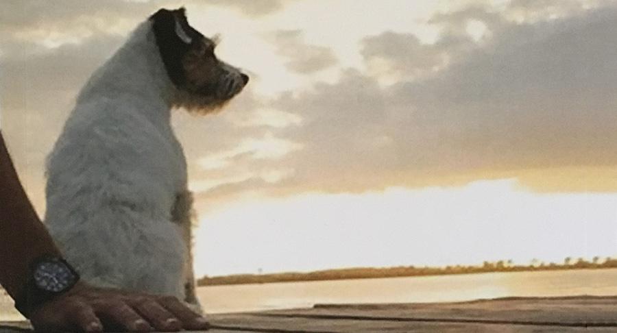 Gespräche mit meinem Hund | Stephan Boden 1