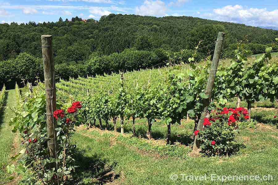 Steiermark Weingut Thaller