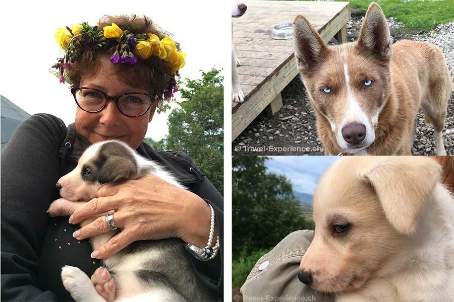 20 tierische Begegnungen während unserer Reisen 6