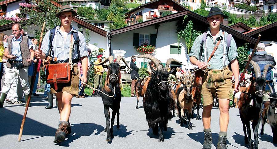 Mittenwald: Tierische Zugspitz-Region 2
