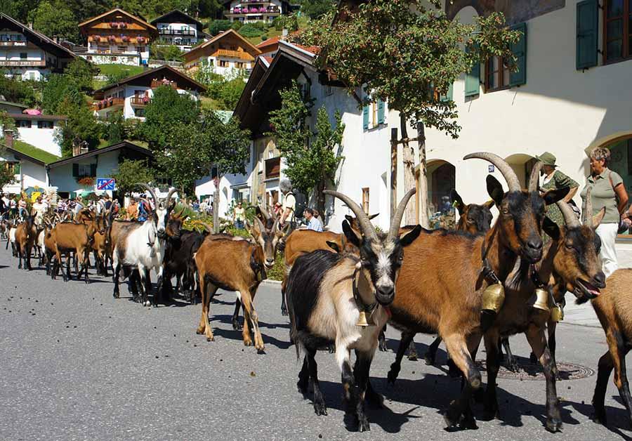Mittenwald: Tierische Zugspitz-Region 5