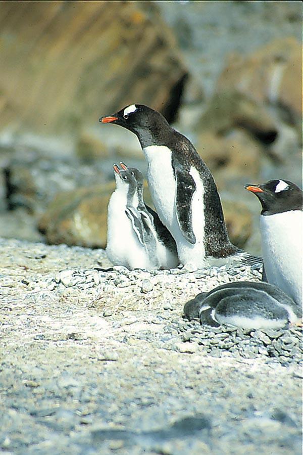 Antarktis – die andere Welt 9