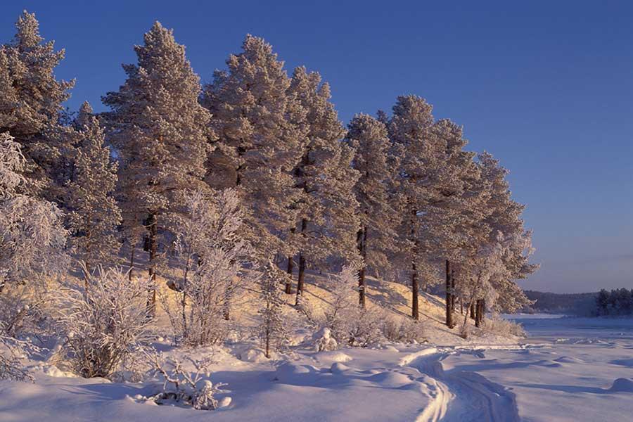 Lappland, DAS Winterwunderland 4