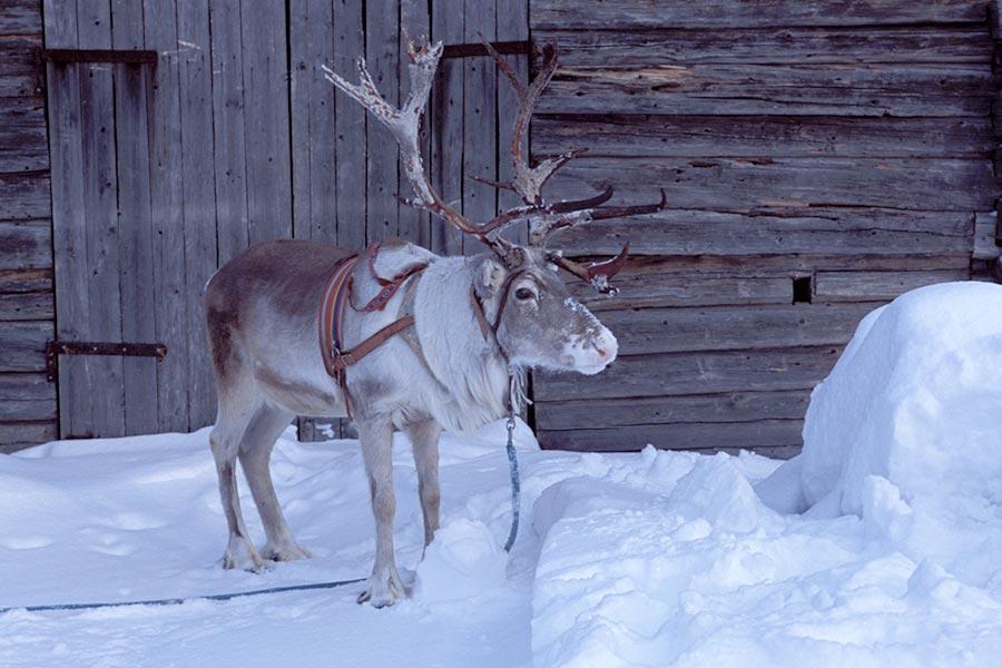 Lappland, DAS Winterwunderland 8