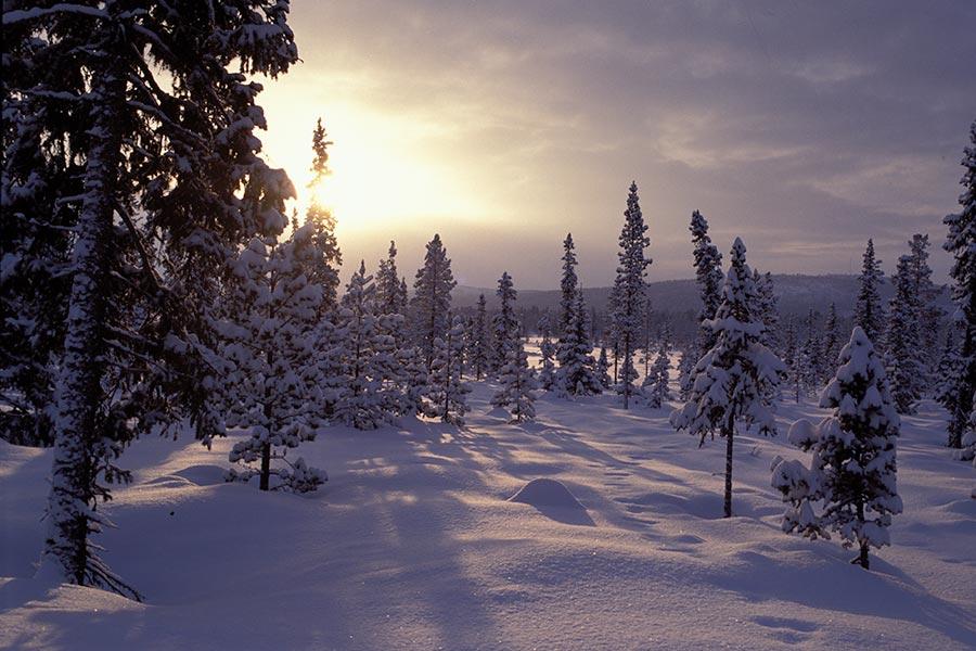 Lappland, DAS Winterwunderland 6