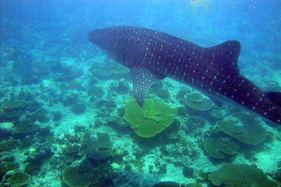 Lux Island Resort Maldives - göttlich, aber allürenfrei 5