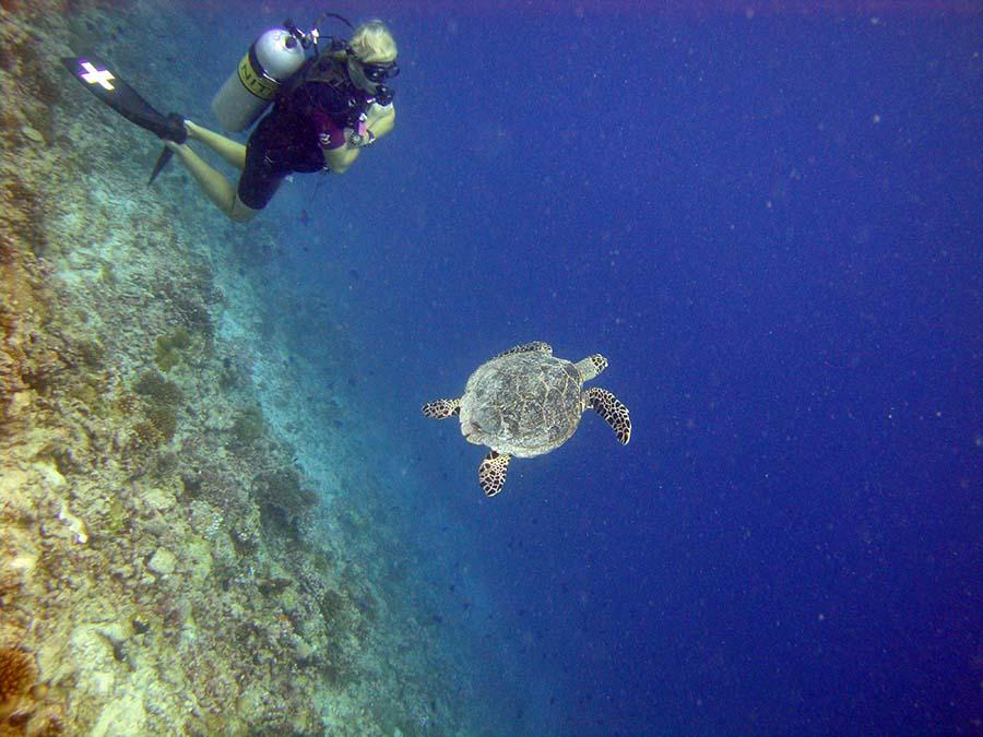 Lux Island Resort Maldives - göttlich, aber allürenfrei 6